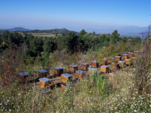 Miel Mexicanaのハチの巣箱
