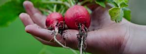 第三回セミナー 農業のイメージ